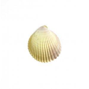 Pendente Concha Natural - U Dourado