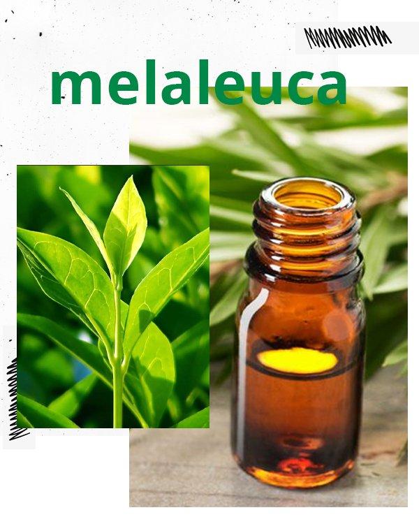 melaleuca - tea tree - óleo essencial - cuidados com a pele - beleza