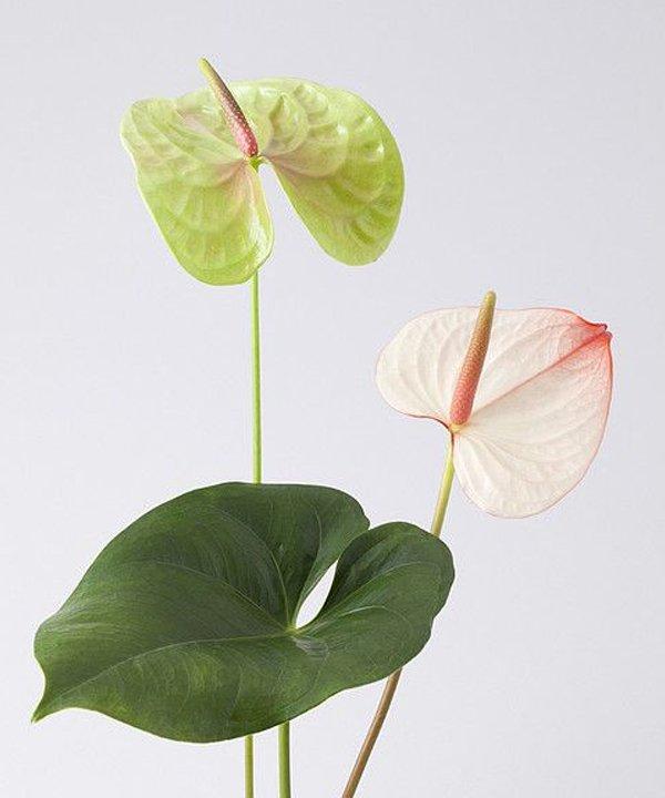 Plantas para ter em casa - Plantas para ter em casa - Plantas para ter em casa - Plantas para ter em casa - Plantas para ter em casa - https://stealthelook.com.br