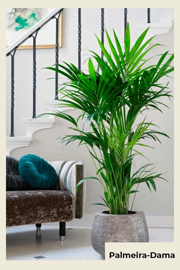 Palmeira-dama - planta  - planta - verão - Em casa - https://stealthelook.com.br