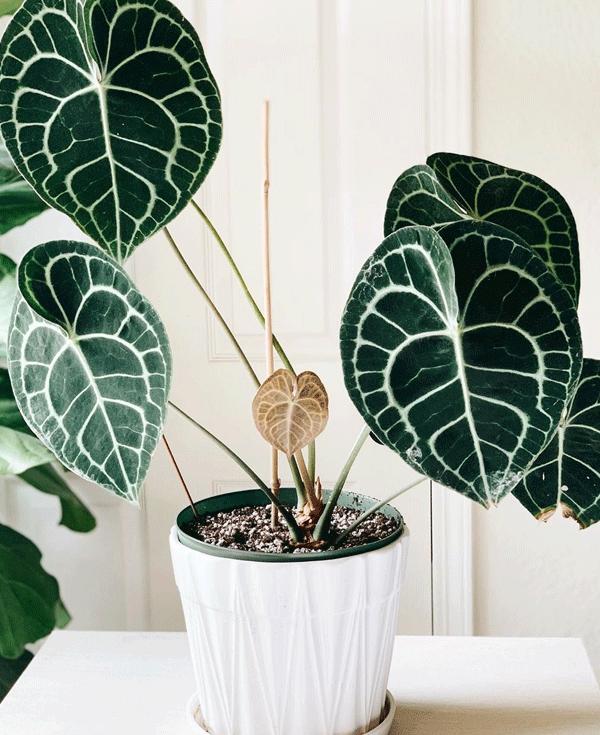 plantas no calor - plantas no calor - plantas no calor - plantas no calor - plantas no calor - https://stealthelook.com.br