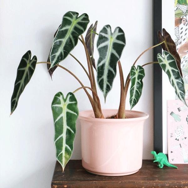 plantas pra decorar - plantas pra decorar - plantas pra decorar - plantas pra decorar - plantas pra decorar - https://stealthelook.com.br