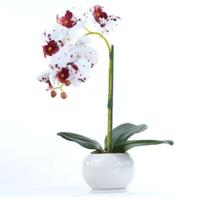 Arranjo de Orquídea Artificial Tigre em Vaso Branco Elis - Vila Das Flores